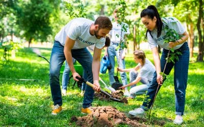 We're Giving Back By Planting Trees